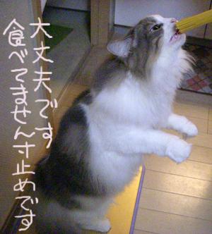 Blog2010111502