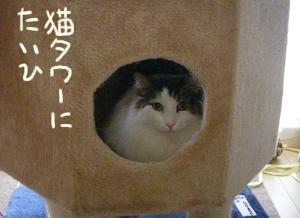 Blog201104093
